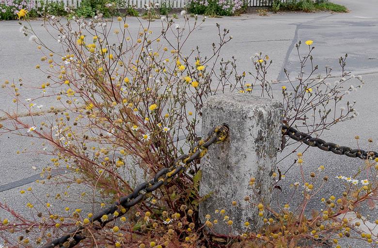 BlumenamWeg-1.jpg