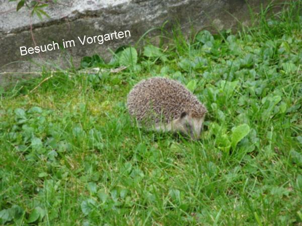 BesuchimVorgarten2015.jpg