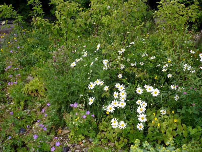 Blumenwieseb.jpg