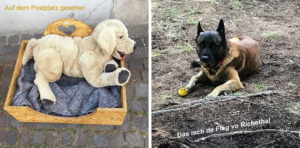 HundeTest.jpg